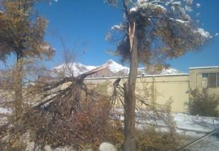 وقتی زمستان با مسئولین استان هماهنگ نباشد